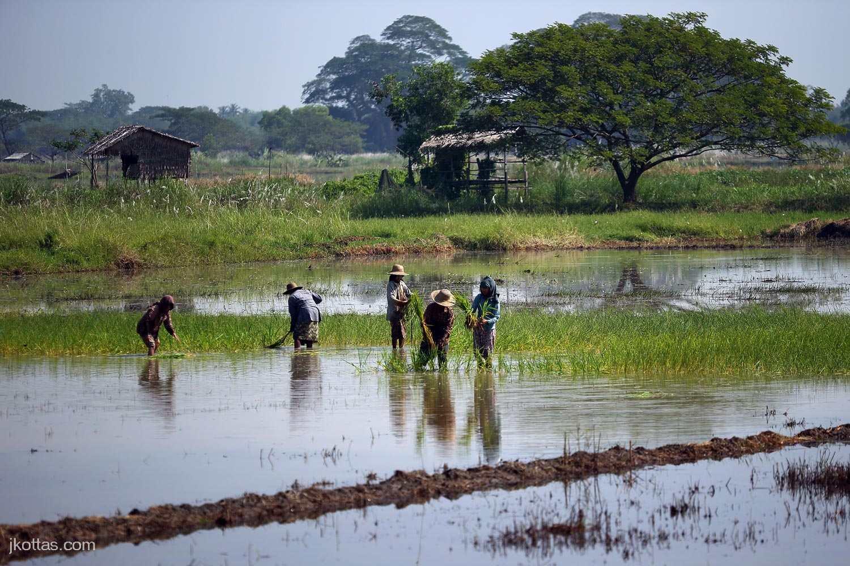 burmese-village-24