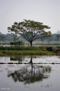 burmese-village-25